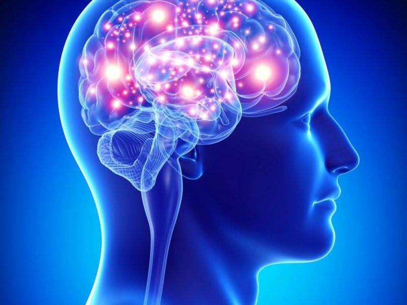 Влияние  омега3 на рост мозга