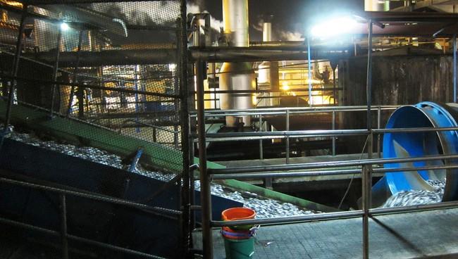 Переработка рыбы в Перу