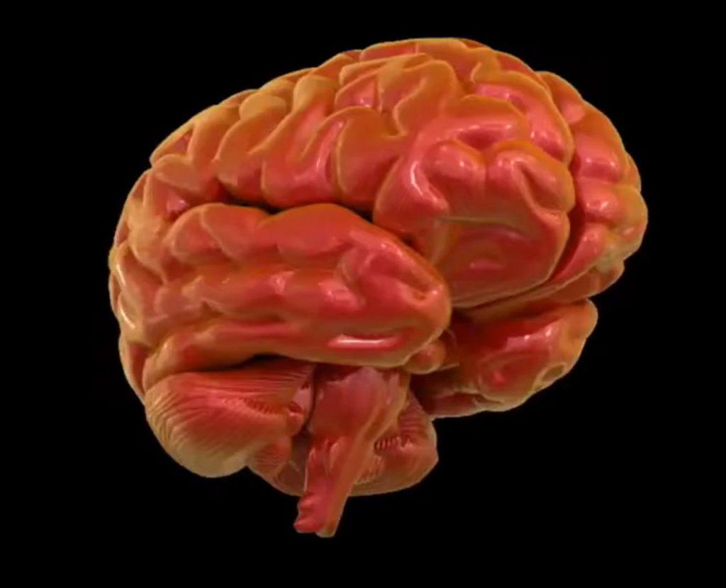 Рыбий жир и питание мозга